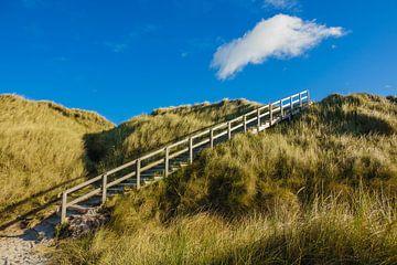 Landschaft mit Dünen auf der Insel Amrum sur Rico Ködder