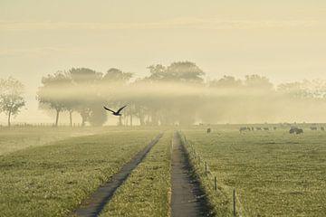 Early bird von Johanna Varner