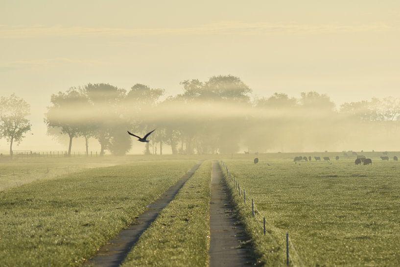 Early Bird van Johanna Varner
