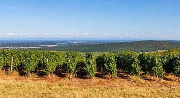 Landschaft mit Weinbergen auf grünen Hügeln in Frankreich, Europa von WorldWidePhotoWeb
