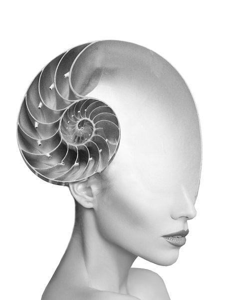 Shell girl van Dreamy Faces