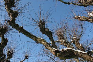 Oude boom bedekt met een klein laagje sneeuw van Toekie -Art