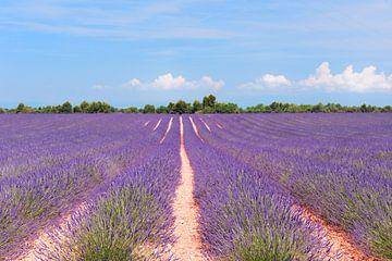 Lavendelfeld in Frankreich von Ivonne Wierink