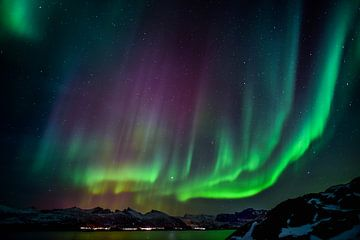 Prächtige Nordlichter über Bergfjorden in Norwegen von Koen Hoekemeijer