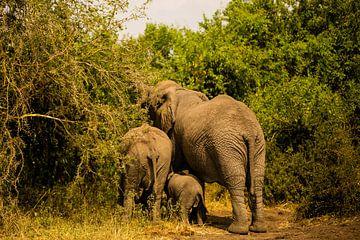 Een olifantenfamilie aan het eten in Oeganda, Afrika van Laurien Blom