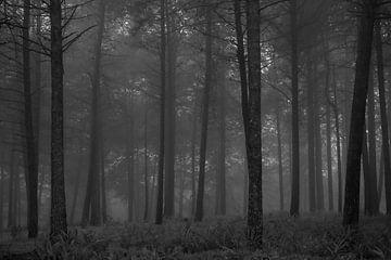 Bos op een mistige morgen van Theo van Woerden