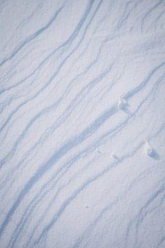 Patroon van verse poeder sneeuw in het winter wonderland van Amere, Nederland | Sneeuw landschappen  van Evelien Lodewijks