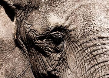 Het oog van de olifant von Rune Scholts