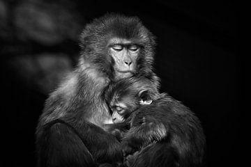 Rhesusaffenmutter mit Kind von Chihong