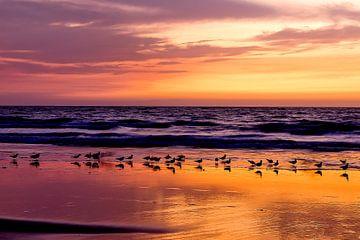 De vogels aan de Atlantische Oceaan van Wilma  Wijers Smeets