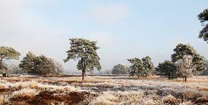 Winterlandschap op de hei