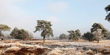 Winterlandschap op de hei van