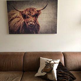 Photo de nos clients: Highland Cattle sur Angela Dölling, sur bois