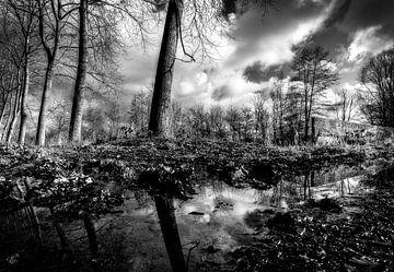 Spiegeling in het water van Leen Van den Abeele