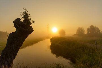 Zonsopkomst tijdens mistige vroege ochtend sur