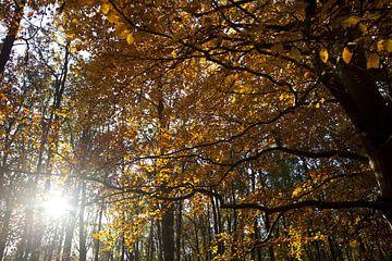 Gouden blaadjes von Leon van Voornveld