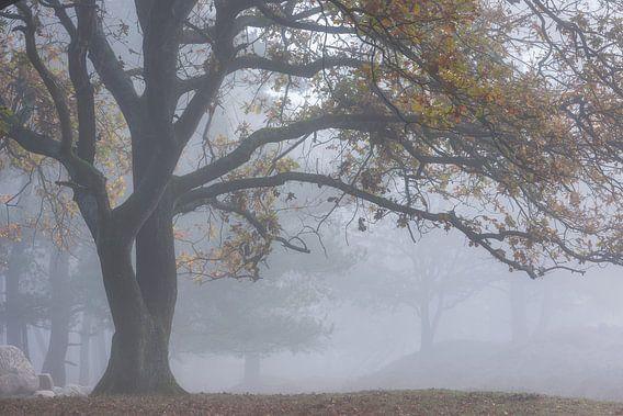 Loofboom in de mist Gasterse Duinen van Jurjen Veerman