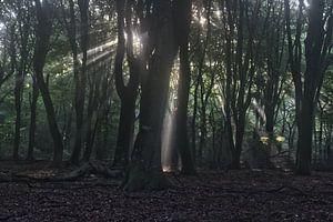 Licht komt van ver von Mark Balster