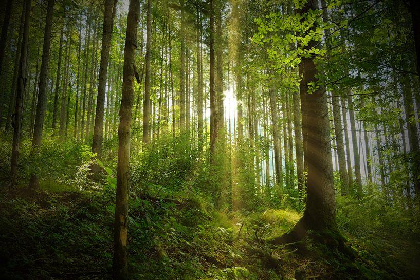 Frühling in der Natur von Andreas Kilian