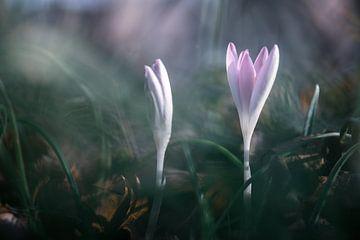 bloemen part 48 van Tania Perneel