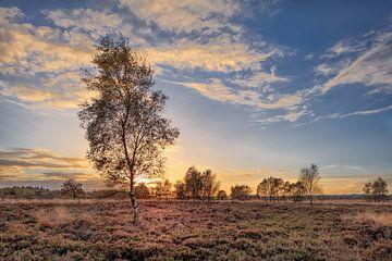 Orange Sonnenuntergang mit dramatischen Wolken und Birke tree_1 von Tony Vingerhoets