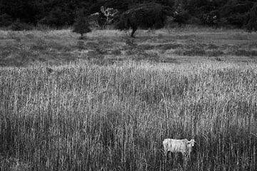 Eenzame koe tussen het hoge gras in Bagan Myanmar. van Twan Bankers