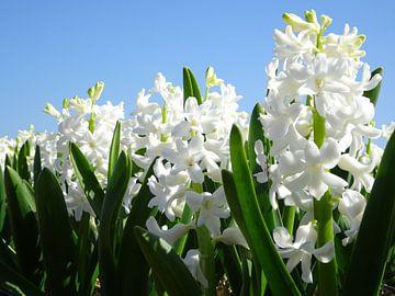 Leve de lente! van Ton van Buuren