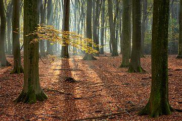 Zweig mit gelben Blättern auf einer Buche von Cor de Hamer