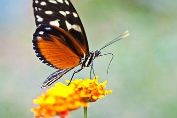 Vlinder en bloem van