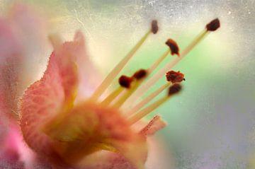 Charme floral sur