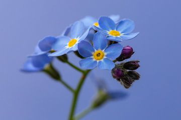 Vergessener blauer Hintergrund von Bas Groenendijk
