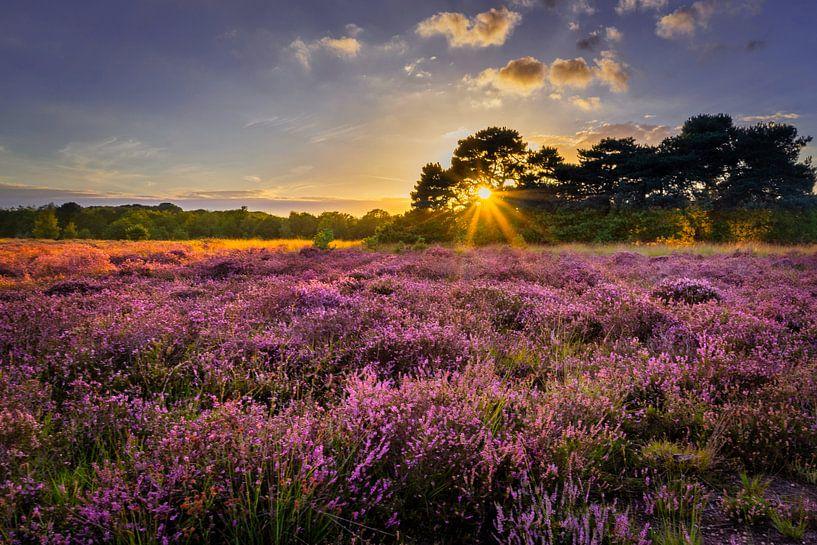 Zonsondergang op de Regte Heide van Dennis Donders