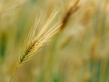 Gräser 2 von Miriam Meijer, en plein campagne.....