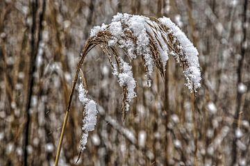 Schnee und Schilf von Frans Blok