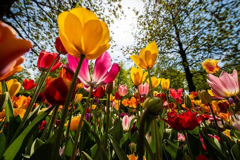 Tulpen in diverse Kleuren van Brian Morgan