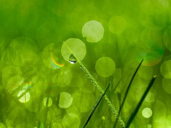 Groen als gras