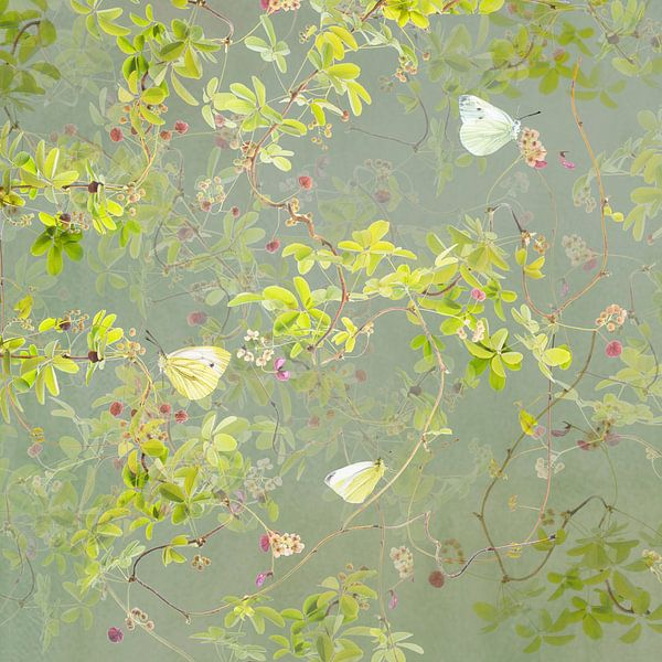 Akebia en geaderde witjes van Fionna Bottema