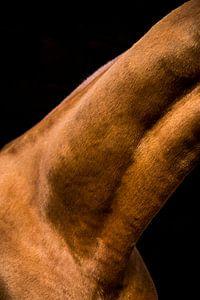 Close-up paard 9 von Lina Heirwegh