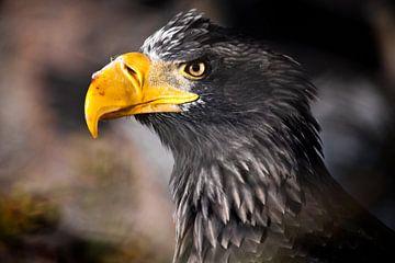 La tête d'un aigle avec un bec dans le sang d'une proie fraîchement mangée, l'air sévère de l'aigle. sur Michael Semenov