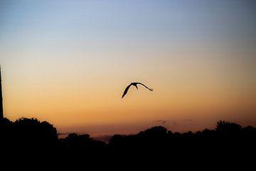 Silhouette eines Storchs von Jesse Lamberink