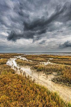 Buitendijks gebied nabij Paesens-Moddergat in Friesland in de herfst van