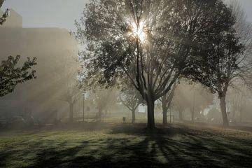 Optrekkende mist in Maastricht-west van Ton Reijnaerdts