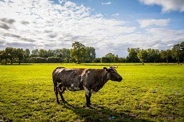 Koe op de uitkijk