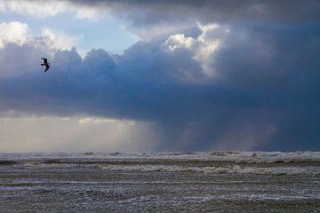 Zilvermeeuw vliegend voor hagelbui boven zee van Menno van Duijn