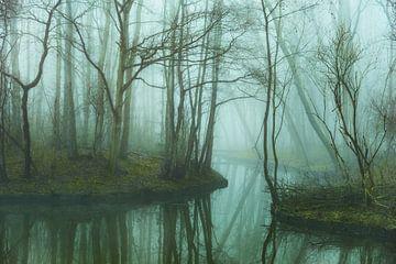 Mistig bos van Arjen Roos