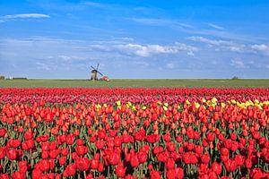 Dutch spring colors