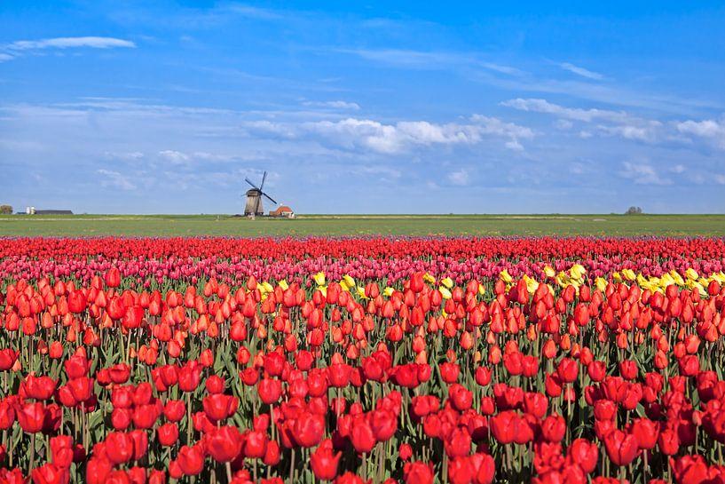 Dutch spring colors van Olha Rohulya