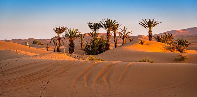 Oase bij Merzouga, Marokko van Rietje Bulthuis