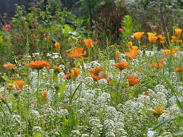 Orange Felder mit Weiß von J..M de Jong-Jansen