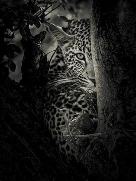 Ich sehe Sie von Sharing Wildlife